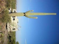 Saguaro National Park.jpg