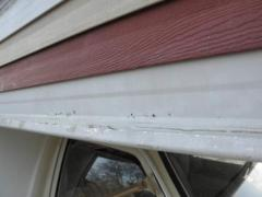 cabover skin Rot 2