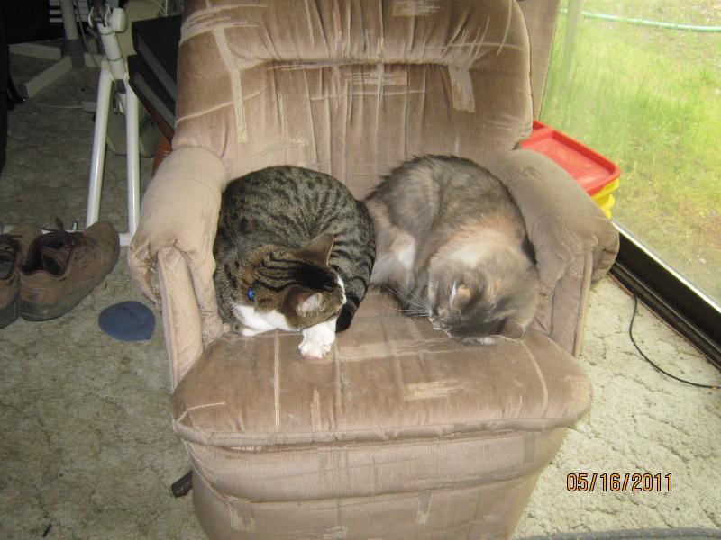 Cozy Kitties #1.JPG